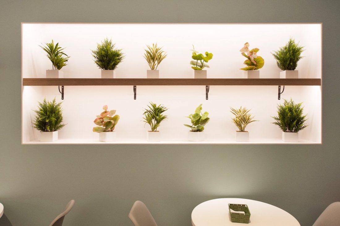 Las plantas en interiorismo y decoración